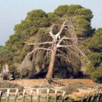 Una gran ciudad sepultada en Doñana ¿La Atlántida?