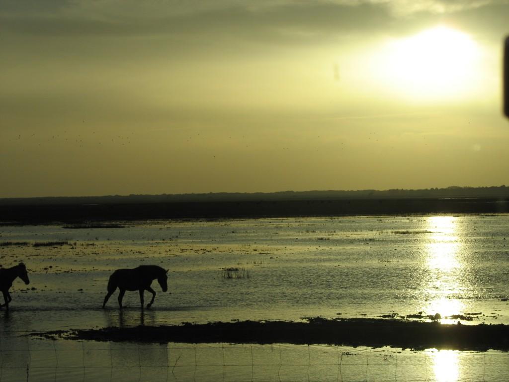 Caballos_en_Doñana_-_panoramio
