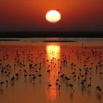 Descubre el encanto de Doñana