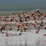 ¿Qué especies podemos encontrar en Doñana?