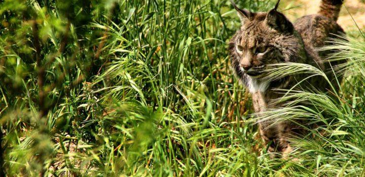 Día Mundial de los animales: la fauna protegida de Huelva