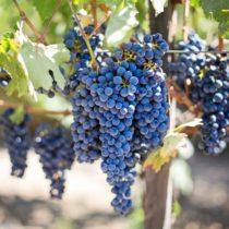 La ruta del vino de Huelva