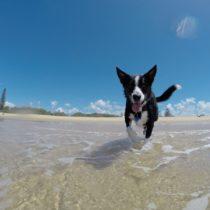 Playas de Huelva a las que poder ir con perro