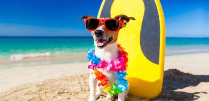 Las mejores playas de la Costa de la Luz