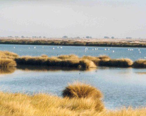 Doñana cumple medio siglo de vida
