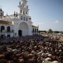 Saca de las Yeguas de Almonte 2019